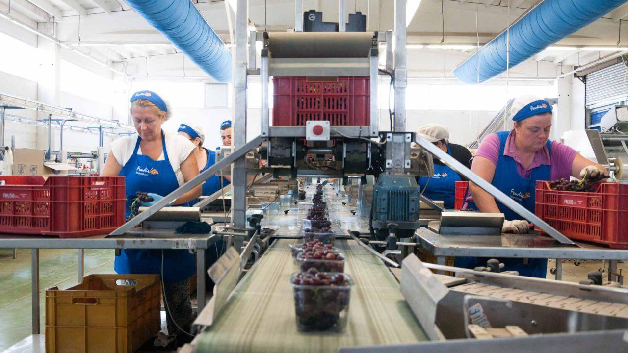 aziende di produzione ed export di prodotti ortofrutticoli tipici della Puglia 01