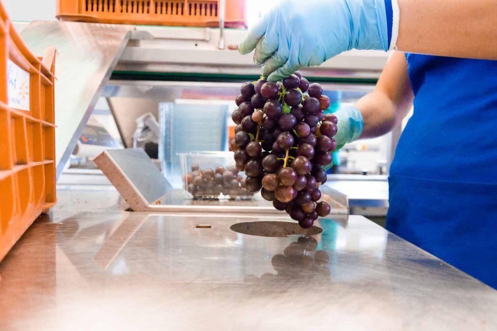 aziende di produzione ed export di prodotti ortofrutticoli tipici della Puglia 04