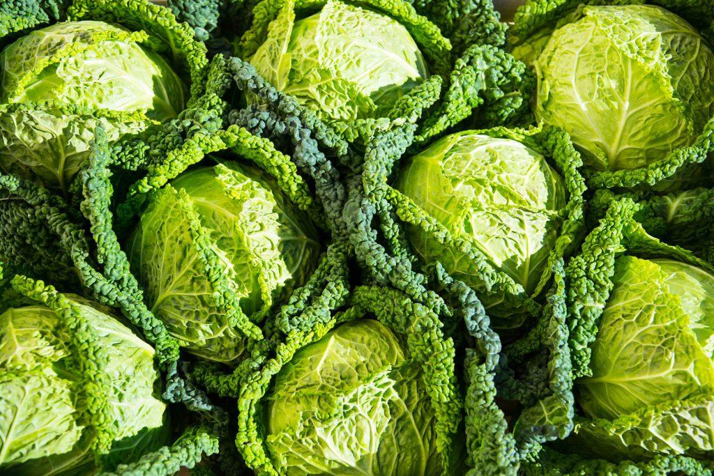 cavolo verza - prodotti ortofrutticoli puglia