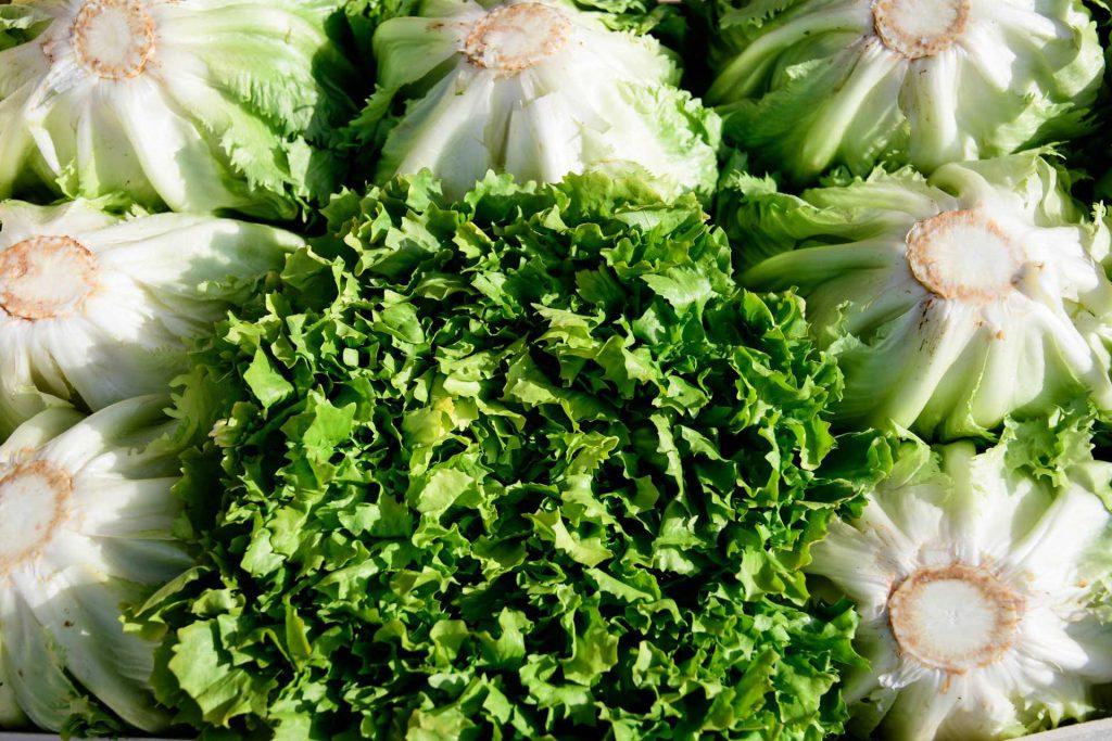 insalate - prodotti ortofrutticoli puglia