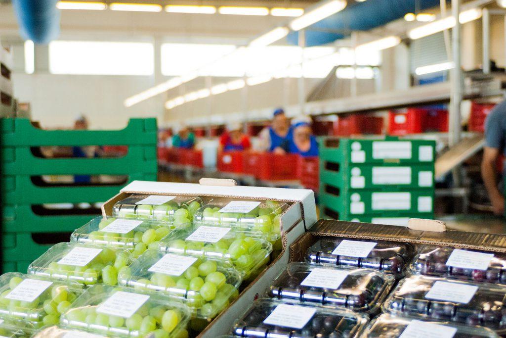 azienda produzione uva da tavola