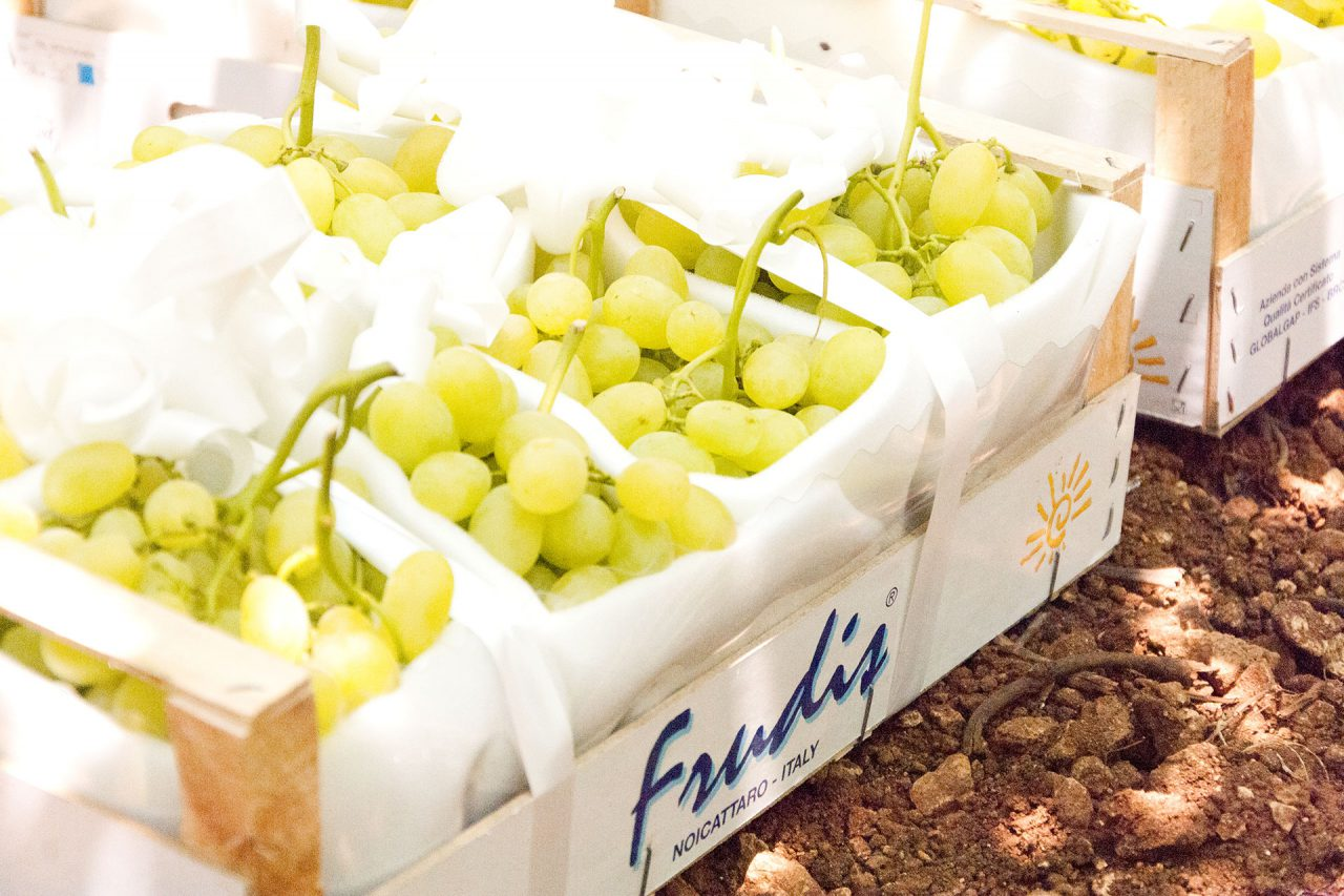 azienda produzione uva da tavola 30