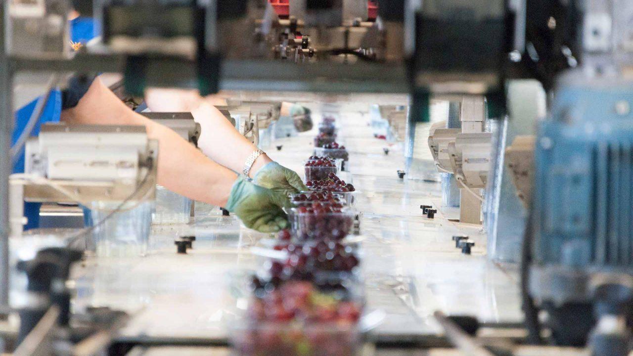 aziende di produzione ed export di prodotti ortofrutticoli tipici della Puglia 02