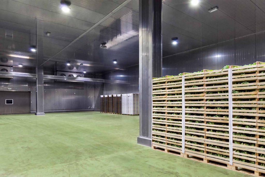 aziende di produzione ed export di prodotti ortofrutticoli tipici della Puglia 06