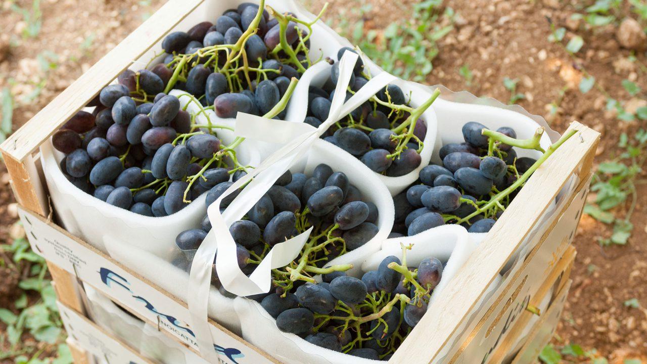 azienda produzione uva da tavola 22